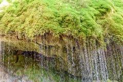 Gola di Wutach con il fiume nell'erba di moos - camminando nel bello paesaggio del pi? blackforest, Germania immagini stock libere da diritti