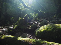 Gola di Yakushima Shiratani Unsui-kyo fotografia stock libera da diritti