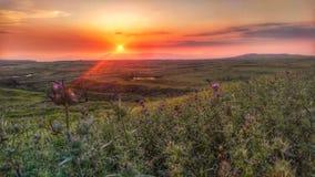 Golan-Höhensonnenuntergang-Landschaftsfeld lizenzfreie stockbilder