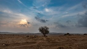 Golan Height Lonely Tree Landscape stock photo