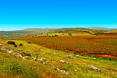 Golan Heights Imagem de Stock Royalty Free