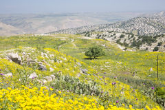 Golan Heights lizenzfreies stockbild