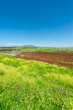 Golan Heights stock foto's