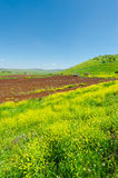 Golan Heights Stock Photo