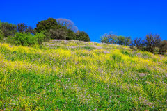 Golan Heights in sunny day Stock Photography