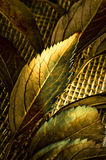 Gold autmn leaves Stock Images