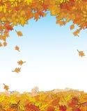 Gold autumn. Royalty Free Stock Image