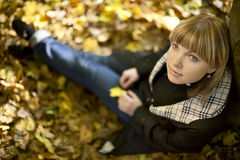Gold autumn Royalty Free Stock Images