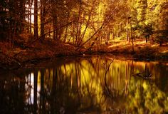 Gold Autumn Stock Photos