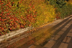 Gold autumn Royalty Free Stock Photo