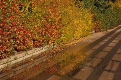 Gold autumn royalty free stock photo