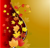 Gold autumn background with leaves Stock Photos