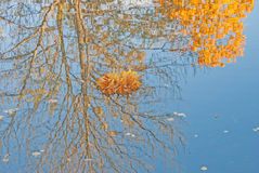 Gold autumn; bunch of leaves in a pond Stock Image
