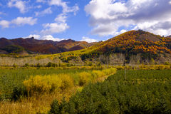 Gold Autumn of China. North view of China in autumn Stock Image
