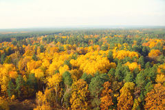Gold autumn, flight on a ball. Aerial view of forest balloon flight , gold autumn Royalty Free Stock Photos