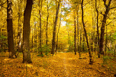 Gold Autumn landscape with footpath -  Beautiful Trees, fall sea Stock Photography