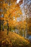 Gold of autumn stock photo