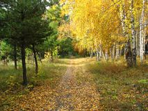Gold autumn landscape - path in a mixed forest Royalty Free Stock Photo