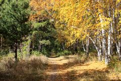 Gold autumn landscape - path in a mixed forest Stock Photo