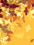 Gold Autumn Leaves Stock Images