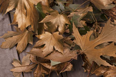 Gold autumn leaves Background. Gold leaves on wooden table Royalty Free Stock Photos