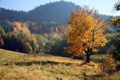 Gold autumn Royalty Free Stock Photos