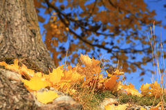 Gold autumn Stock Images
