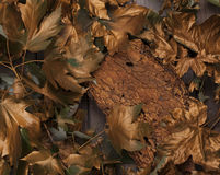 Gold autumn leaves and piece of bark. Gold leaves and bark on wooden table Royalty Free Stock Image