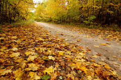 Gold autumn and path in the park Stock Images