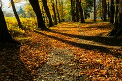 Gold autumn scenery in a forest with the sun casting beautiful rays of light through the foliage unto a footpath stock image