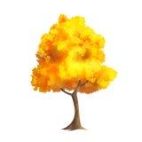Gold Autumn Tree Stockfotos