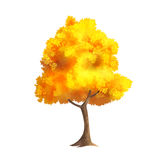 Gold Autumn Tree. Color Vector Photo Realistic Illustration Of Big Gold Autumn Tree Isolated On White Stock Photos