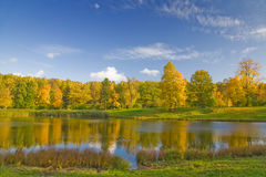 Gold autumn trees. Autumn landscape with blue sky, trees and pond royalty free stock image