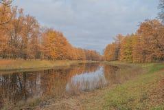 Gold autumn; trees near pond Stock Photos