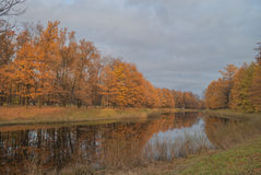 Gold autumn; trees near pond Stock Images