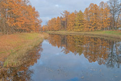 Gold autumn; trees near pond Royalty Free Stock Images