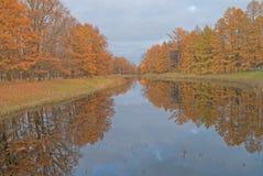 Gold autumn; trees near pond Royalty Free Stock Photos