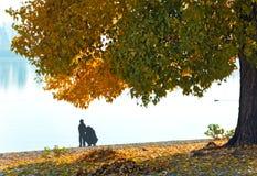 Gold autumn Stock Photo
