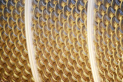 Gold background. Continuous gold curve surface background Royalty Free Stock Images