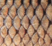 Gold background - fish scales Royalty Free Stock Image