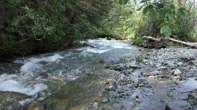 A gold-bearing creek in the yukon territories stock footage