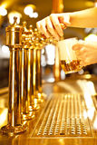 Gold beer Royalty Free Stock Image