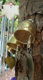 Gold bells on the big tree Royalty Free Stock Images