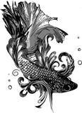 Gold Betta Siamese fighting fish, Betta splendens Pla-kad Thai. Betta fish vector illustration