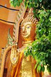Gold big buddha statue, seated in the posture of giving blessings Royalty Free Stock Image