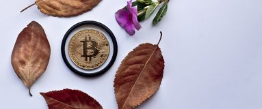 Gold bitcoin on autumn leaves on white background. Design elements for autumn. Royalty Free Stock Images