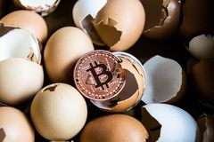 Gold bitcoin coin in broken eggshell. Chicken that laid the golden egg. Financial, business stock photography