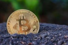 Gold Bitcoin coin on soil. Stock Photos