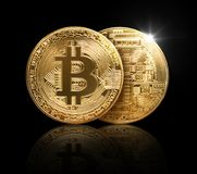Gold bitcoin physical on black background with reflecti stock image