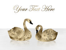 Gold and Black Swans on White Background Stock Photos